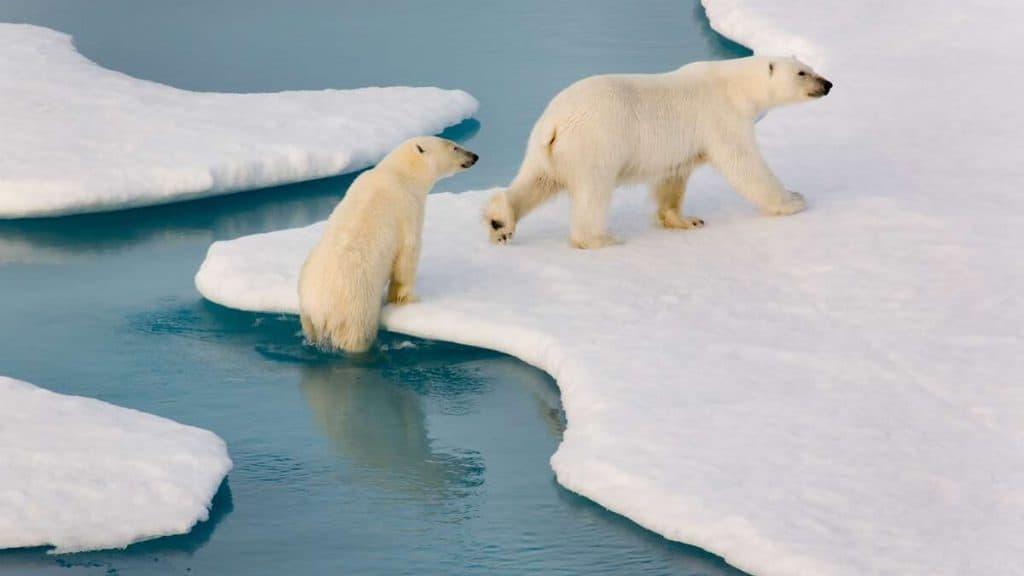 Tæt på dyreliv i Arktis.