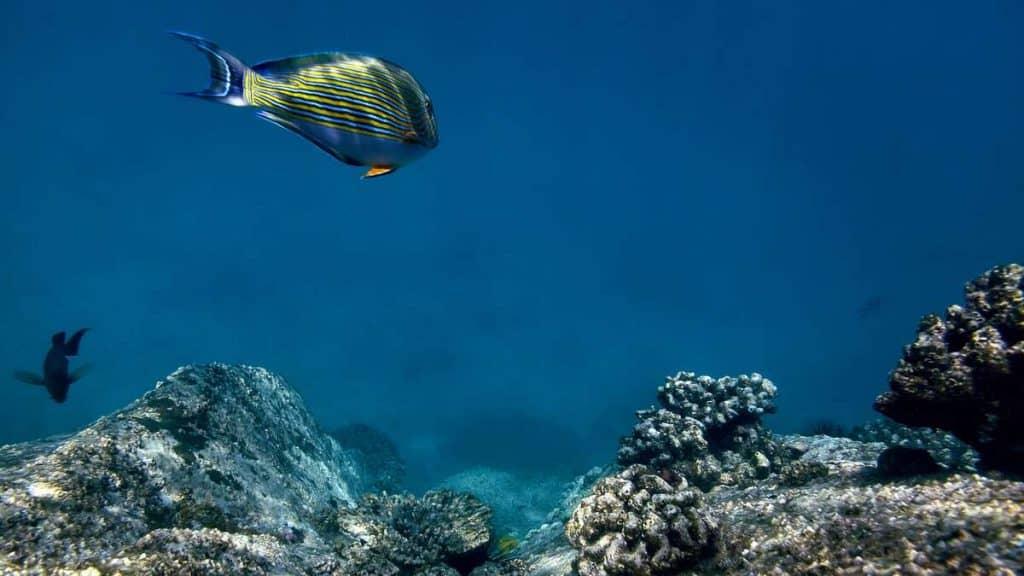 Oplev de skønne koralrev ud for øen.