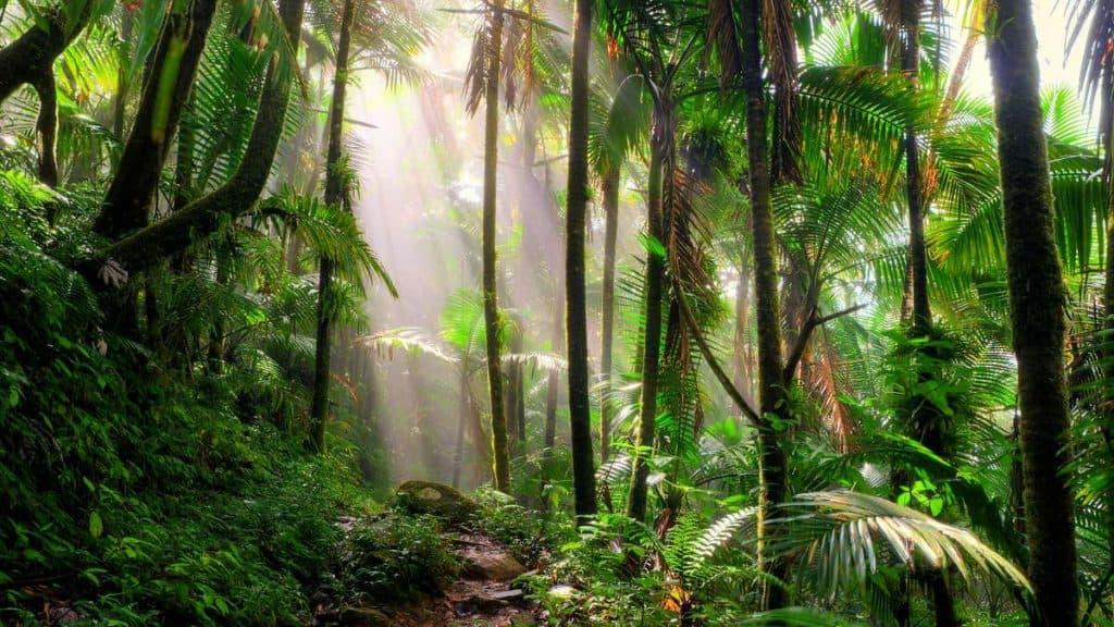 Regnskov i Amazonas.