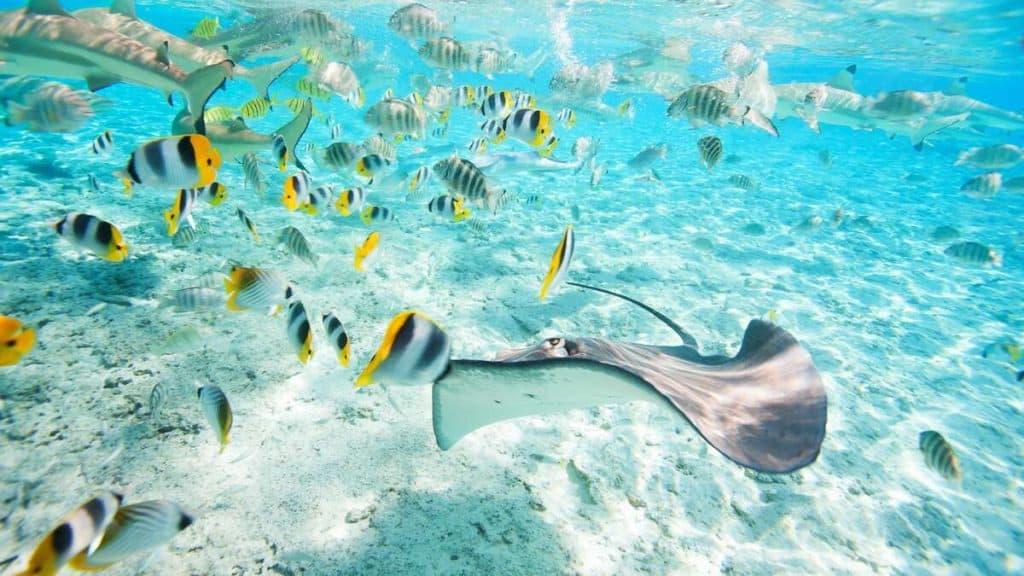 Udforsk livet under vand ved Bora Bora.