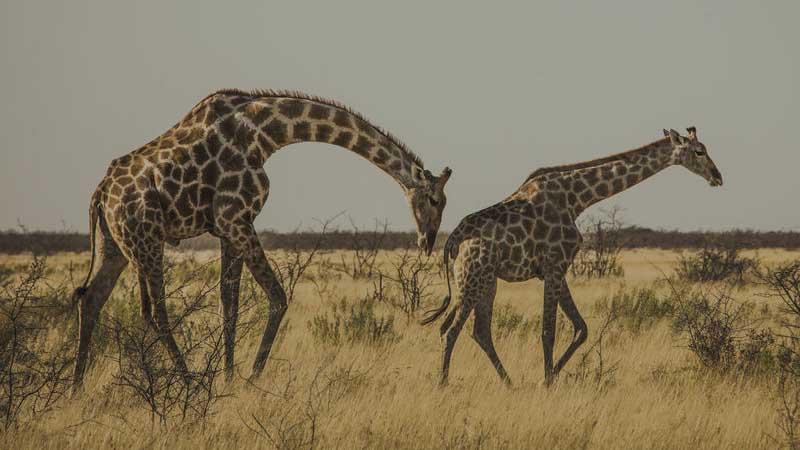Fascinerende Namibia.